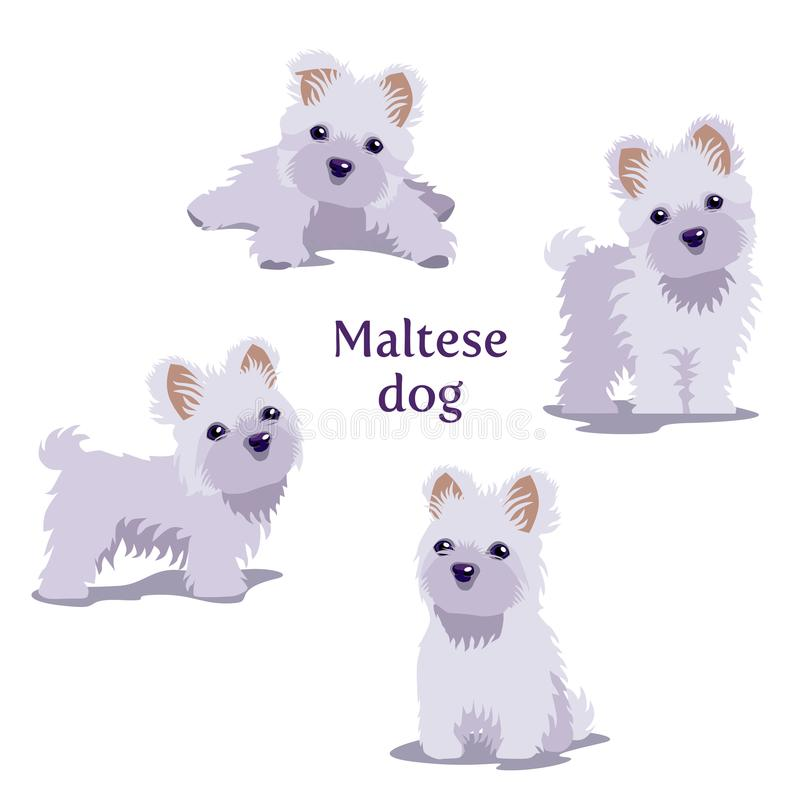 Vector illustration of Maltese puppies in different poses. stock illustration