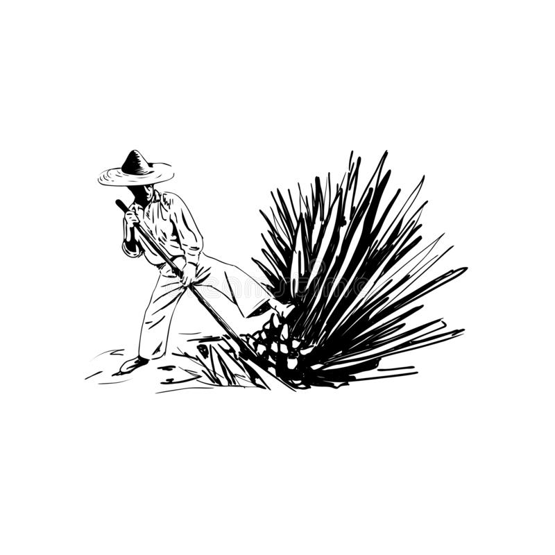 Vector illustration of a man chopping agave, harvesting agave for making tequila, hand sketch. Vector illustration of a man chopping agave, harvesting agave for royalty free illustration