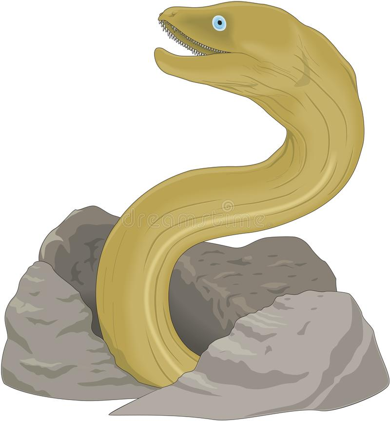 Moray Eel Illustration. A vector illustration of a moray eel vector illustration