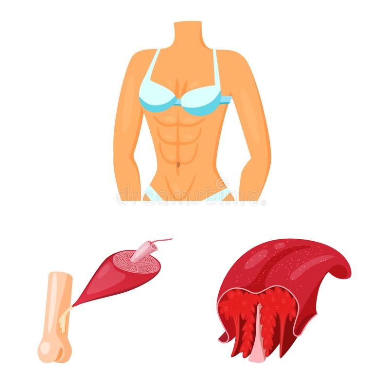 Vector illustration of muscle and cells sign. Set of muscle and anatomy stock symbol for web. Isolated object of muscle and cells logo. Collection of muscle and vector illustration
