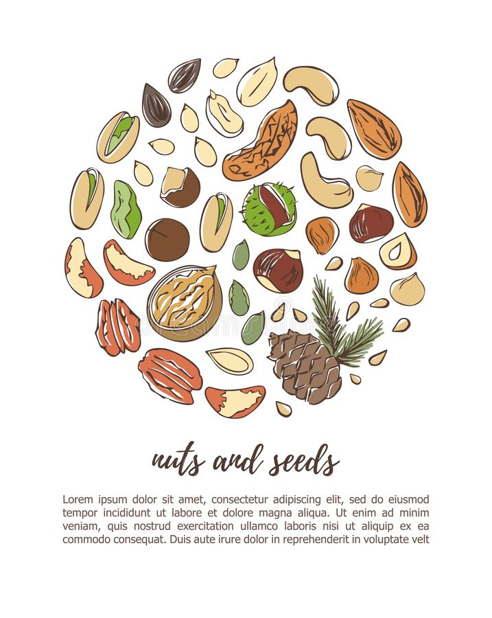 Vector illustration of Nuts and seeds in circle composition. Vector illustration Nuts and seeds. Hand drawn doodle objects in circle composition with place for vector illustration
