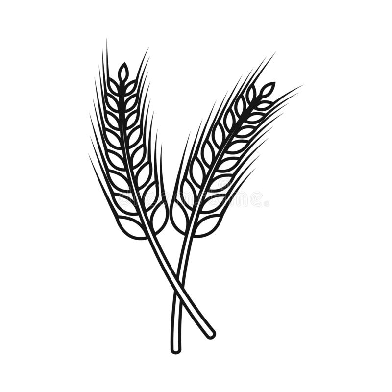 Free Vector Illustration Of Wheat And Stalk Sign. Set Of Wheat And Gold Vector Icon For Stock. Stock Image - 163805821