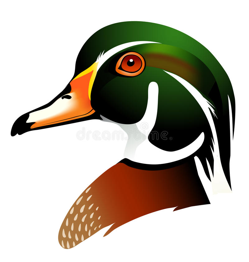 Free Vector Illustration Of Wood Duck Stock Photo - 44449930