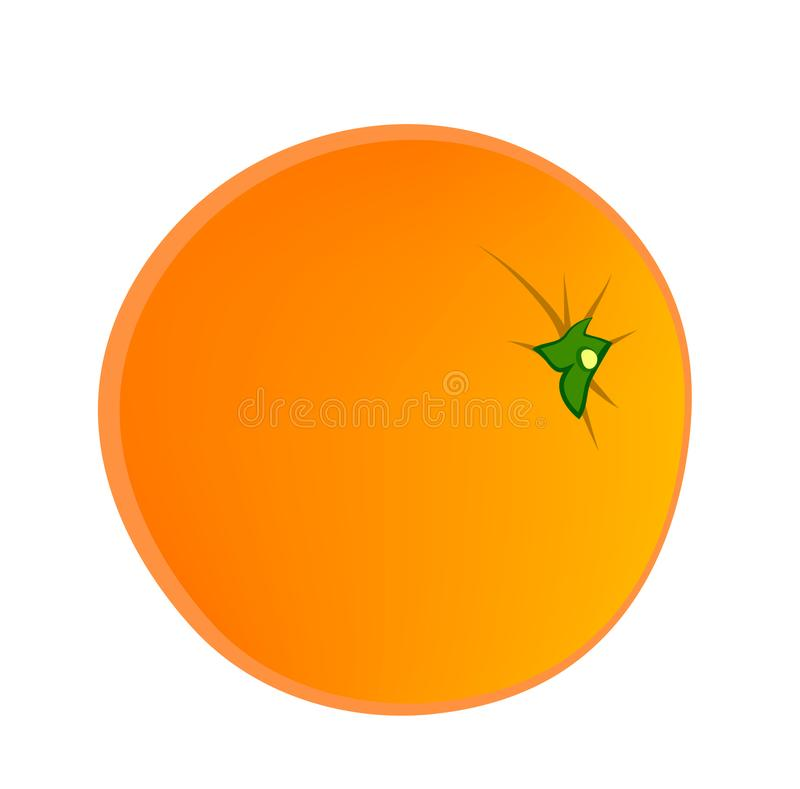 Vector illustration of orange fruit vector illustration