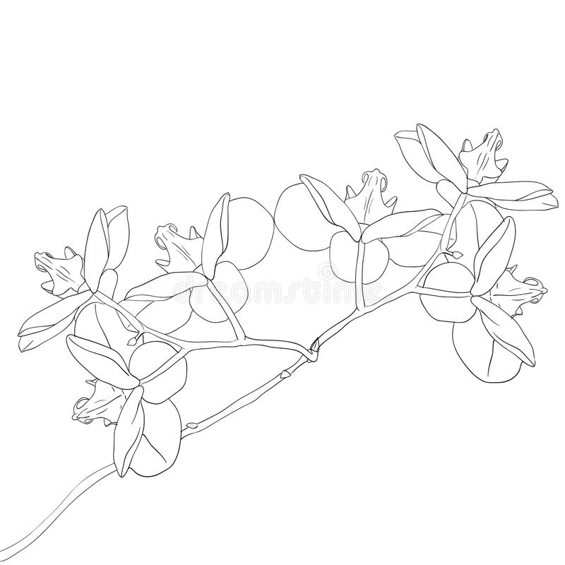 Vector illustration of orchid flower stock illustration