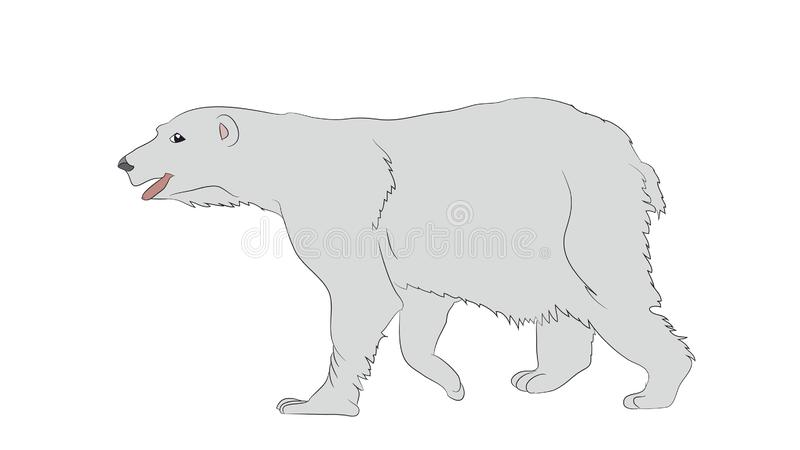 Vector illustration of a polar bear, which stands, drawing, vector vector illustration