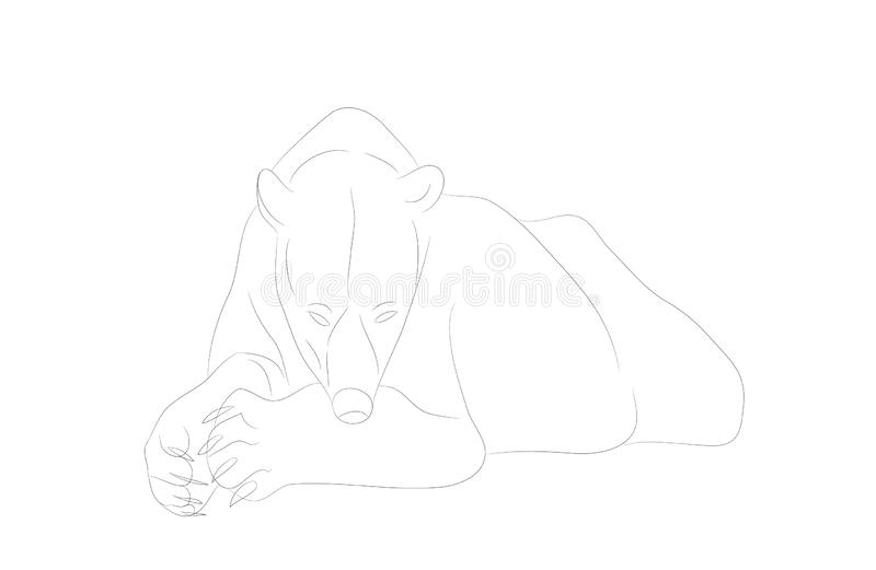 Vector illustration of a polar bear who lies, drawing lines royalty free illustration
