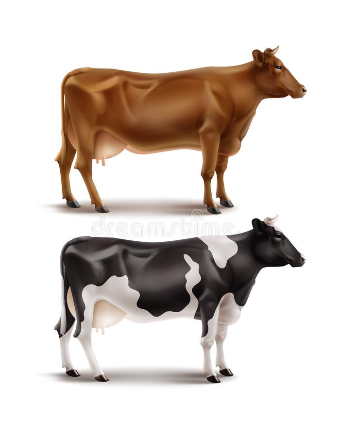 Vector illustration of realistic brown and black and white spotted cows, domestic or farm animal, side view vector illustration
