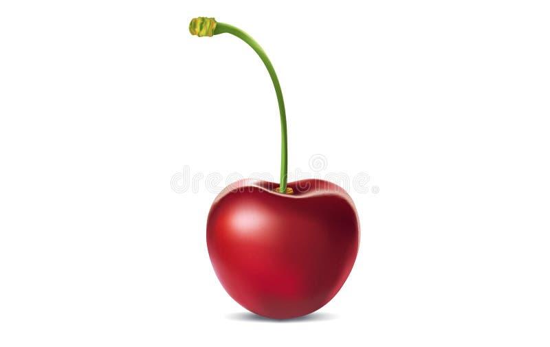 Vector illustration of ripe cherry royalty free stock image