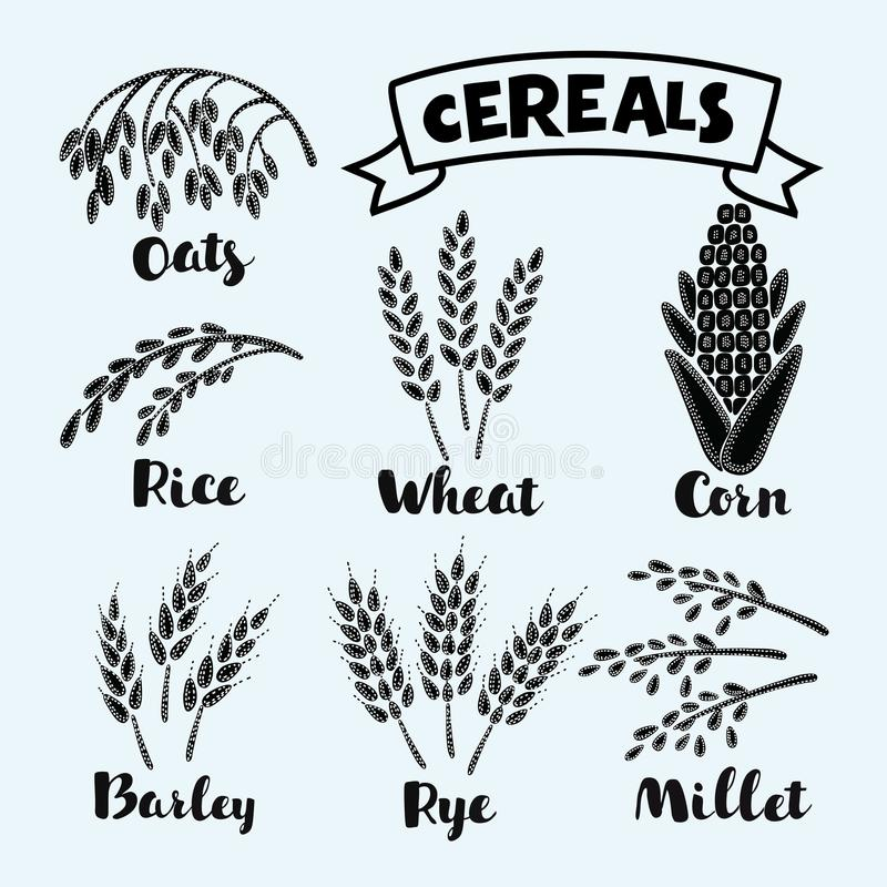 Vector illustration of ripe ears. Of cereals with inking and lettering names in English in black and white color. Agricultural symbols isolated on white vector illustration