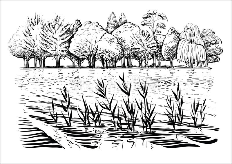Vector illustration of river landscape with trees, water waves and reflexion. Black and white sketch. Black and white vector illustration of river landscape stock illustration