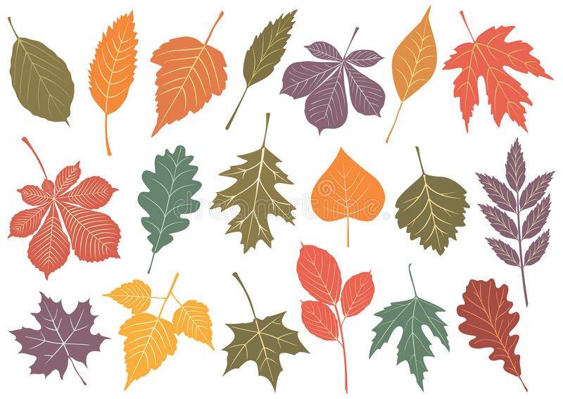 Vector illustration set of 19 autumn leaves. royalty free illustration