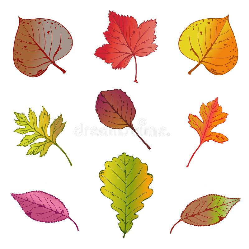 Vector illustration, set of bright autumn leaves on white background. royalty free illustration