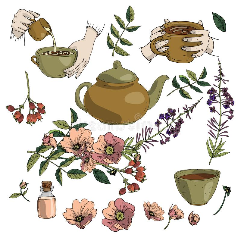 Vector illustration set of herbal tea, teapot, mug in hands, rosehip, blooming sally in brown and green colours isolated on white royalty free illustration