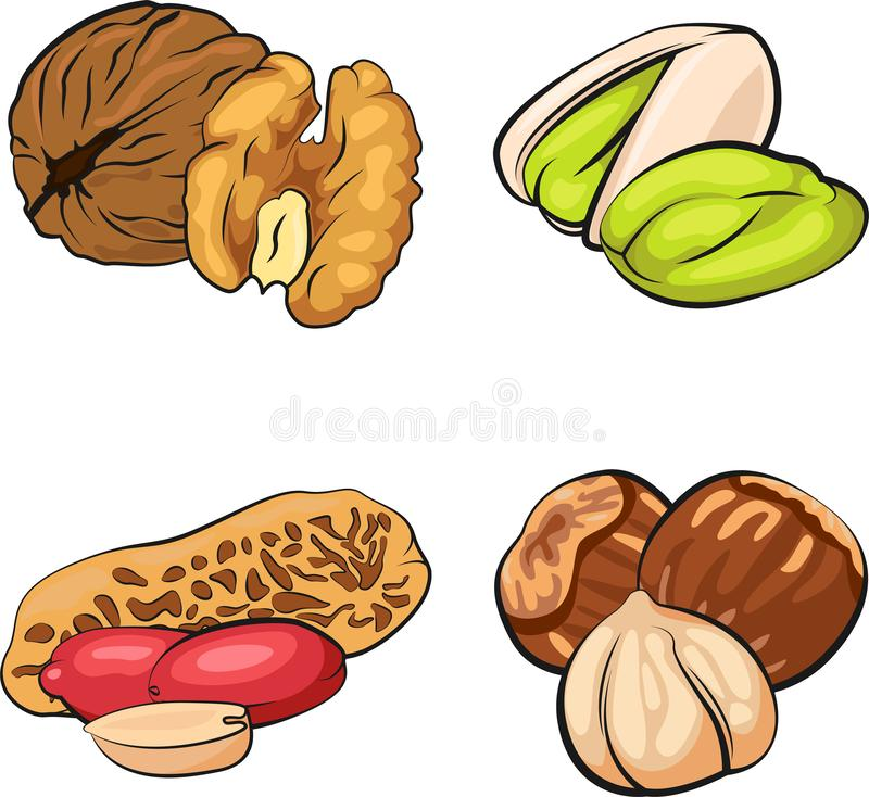 Set of Nuts. Vector illustration stock photography