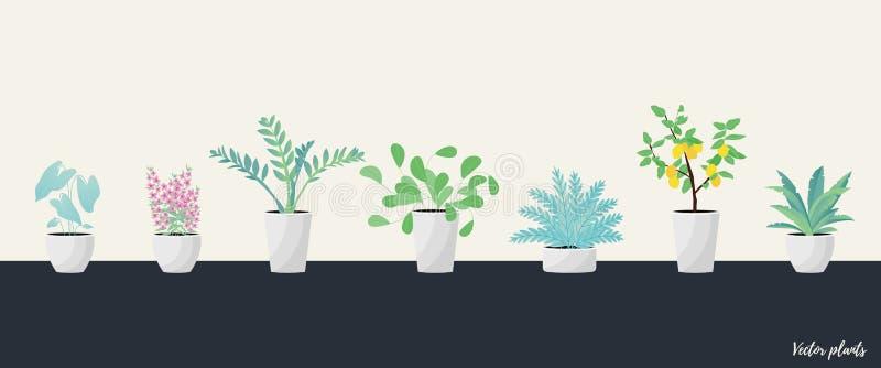 Set of Plants in pot.  Flat style vector illustration