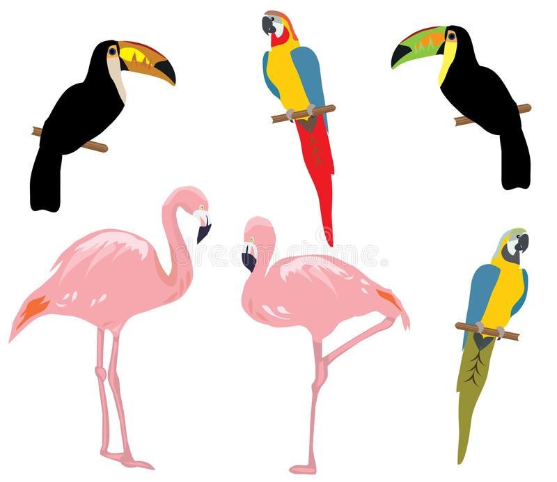 Vector tropical birds isolated on white background. stock illustration