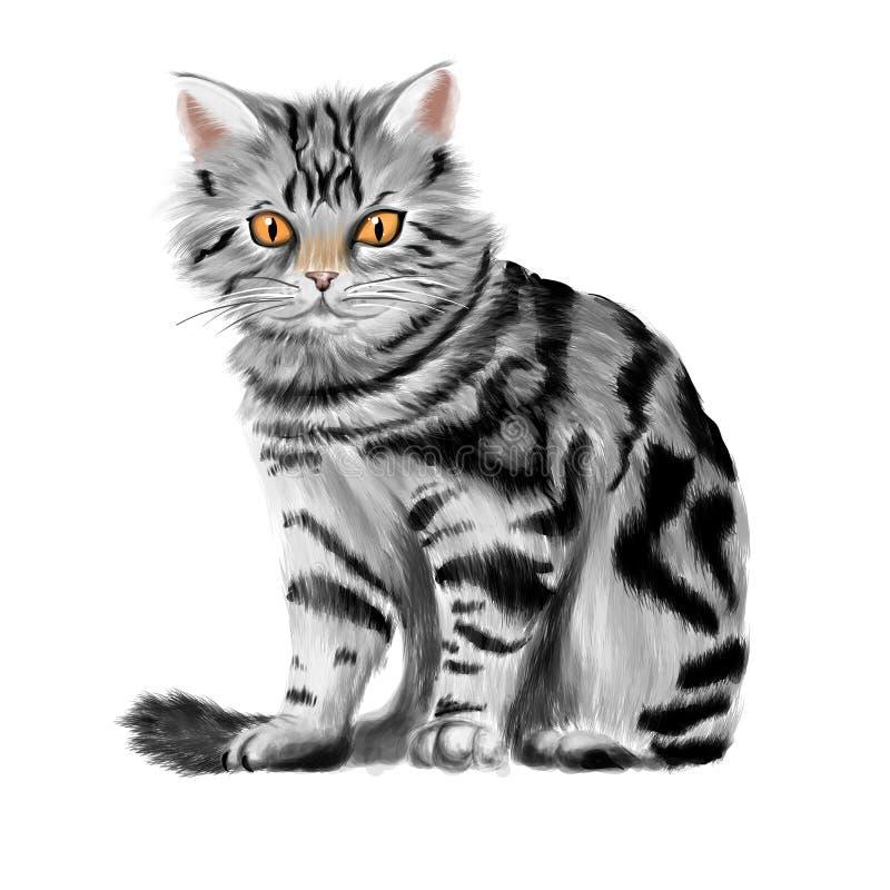 Vector Illustration Of Sitting Tabby Kitten Royalty Free Stock Photo