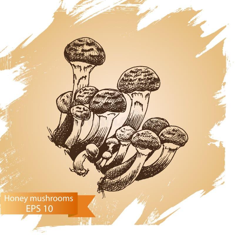 Vector illustration sketch - mushrooms. Food card. Vector illustration sketch - Boletus mushrooms. Food card vector illustration