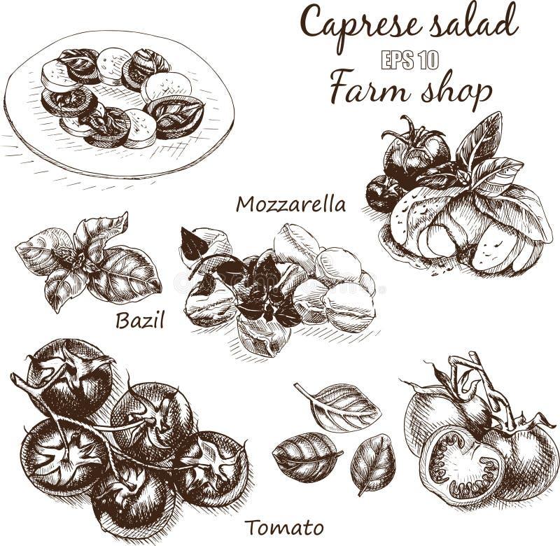 Free Vector Illustration Sketch - Cheese, Salad Caprese. Mozzarella, Basil, Tomato Royalty Free Stock Photography - 89875077