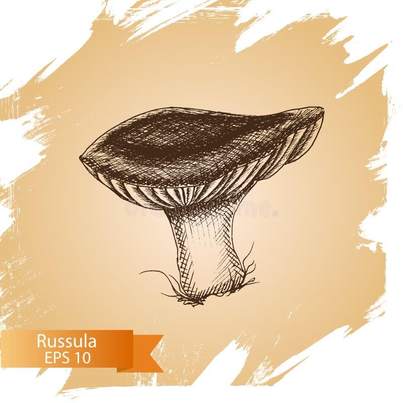 Vector illustration sketch - mushrooms. Food card. Vector illustration sketch - Boletus mushrooms. Food card stock illustration