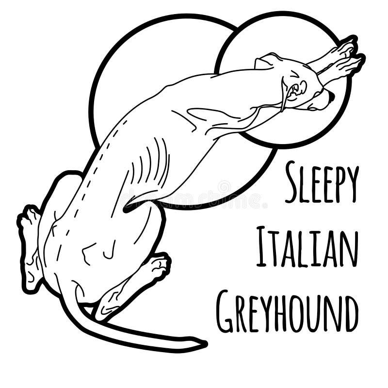 Vector illustration of a sleeping Italian greyhound vector illustration
