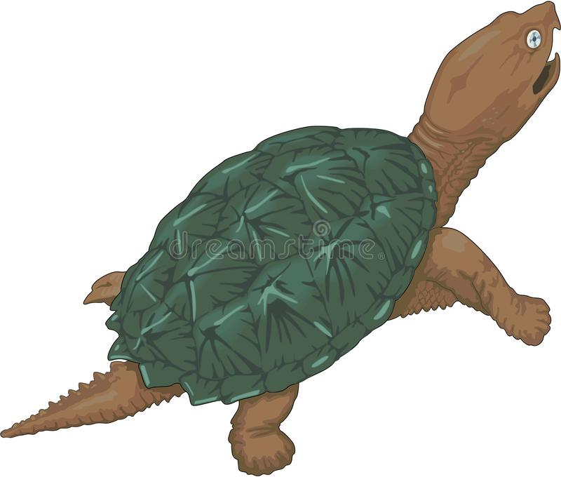 Snapping Turtle Illustration. A vector illustration of a snapping turtle royalty free illustration