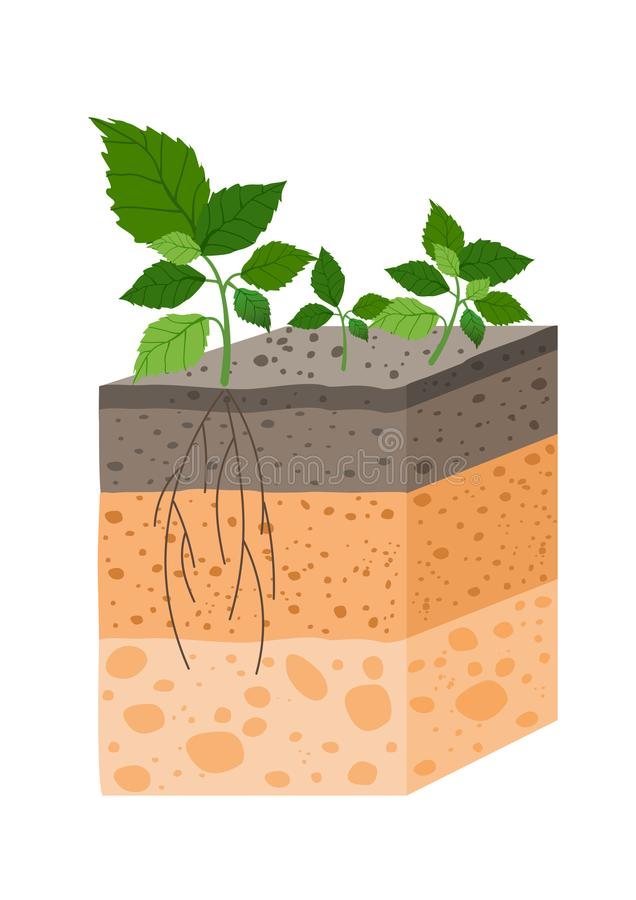 Vector illustration soil profile with plant, breed of soil horizons. Piece of land with plant and roots in flat style. royalty free illustration