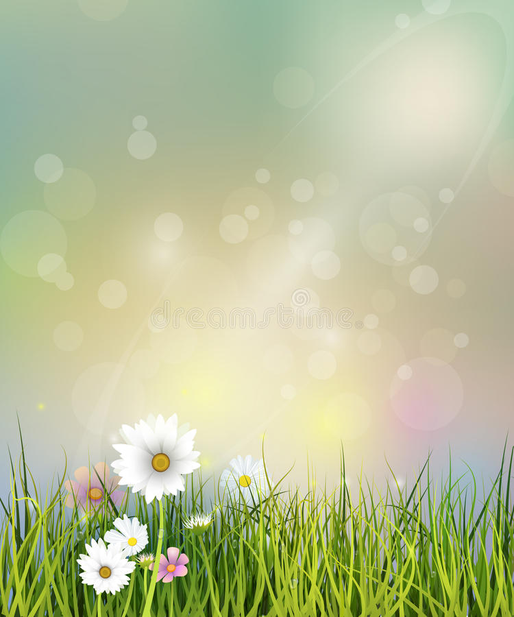 Vector illustration Spring nature field with green grass, white Gerbera, Daisy flowers and wildflowers vector illustration