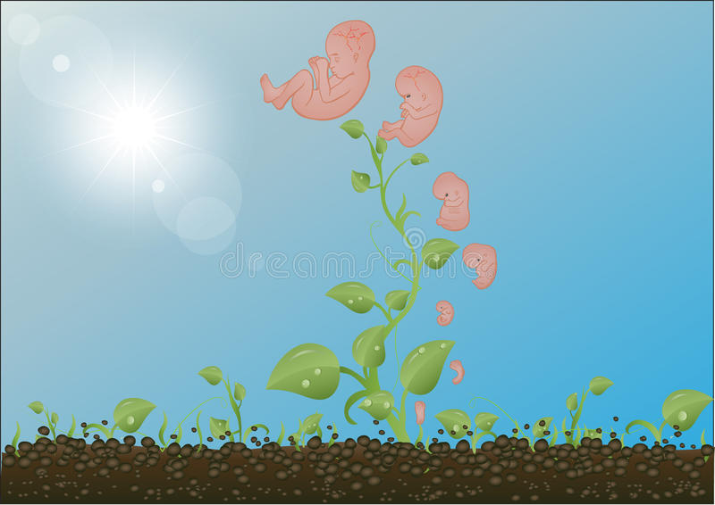 Download Vector Illustration  Sprouts, Stages Stock Vector - Illustration of floral, vector: 20474693