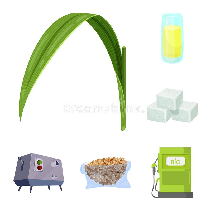Vector design of sugarcane and cane sign. Collection of sugarcane and field vector icon for stock. Vector illustration of sugarcane and cane logo. Set of vector illustration