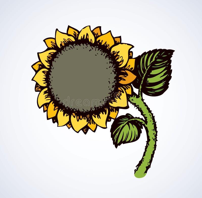 Vector illustration. Sunflower stock illustration