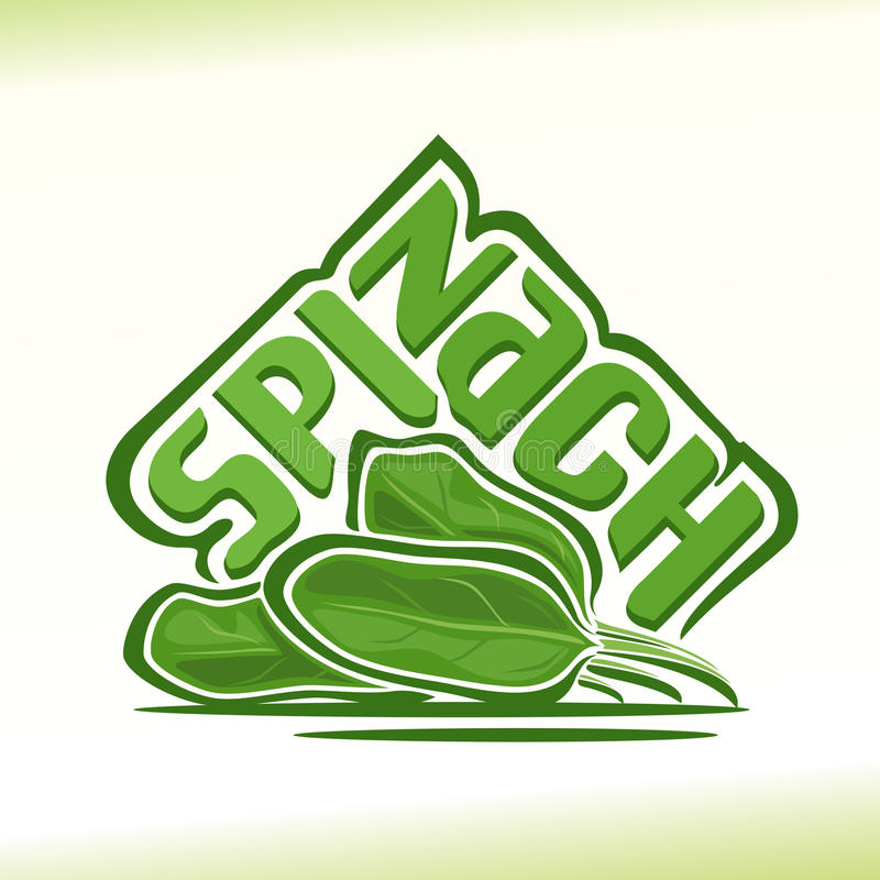 Vector illustration on the theme of spinach royalty free illustration