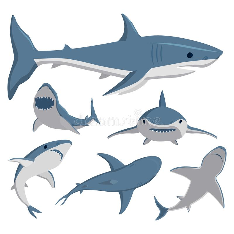 Vector illustration toothy swimming angry shark animal sea fish character underwater cute marine wildlife mascot. Vector illustration toothy white swimming royalty free illustration