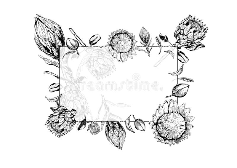 Vector illustration of transparent glass frame with king protea flowers, buds and leaves. stock illustration