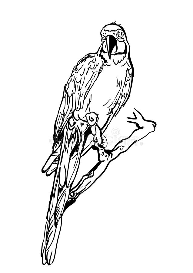 Vector illustration of tropical ara parrot sitting on tree. Isolated monochrome parrot bird. royalty free illustration