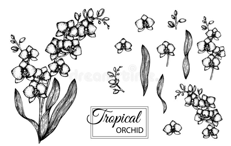 Vector illustration of tropical flower isolated on white background stock illustration