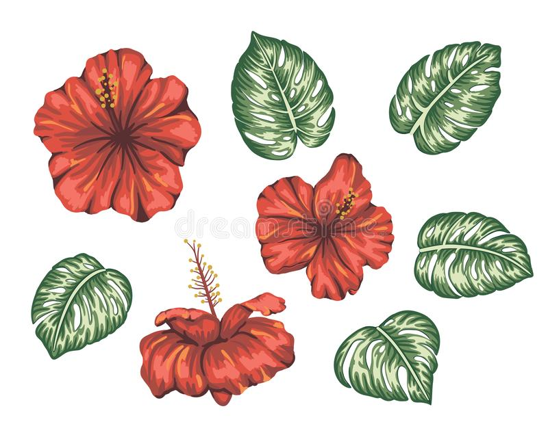 Vector illustration of tropical hibiscus with monstera leaves isolated on white background stock illustration