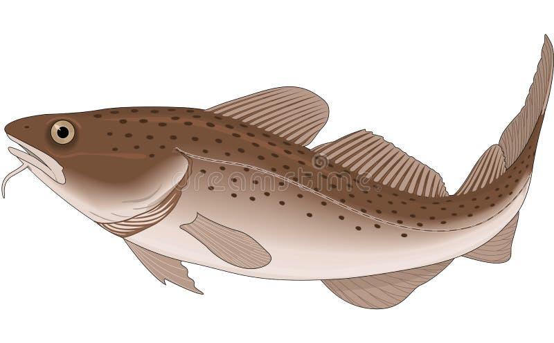True Cod Illustration. A vector illustration of a true cod stock illustration