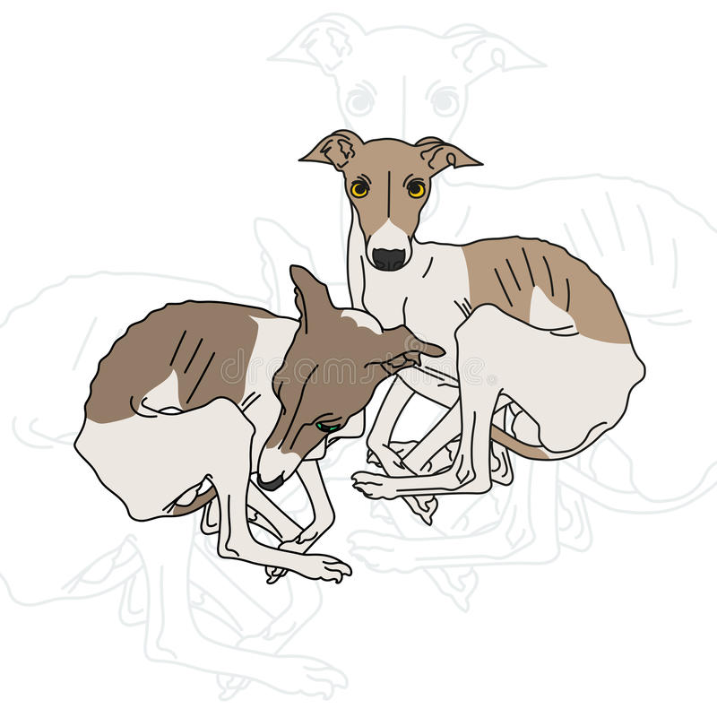 Vector illustration of two Italian greyhound vector illustration