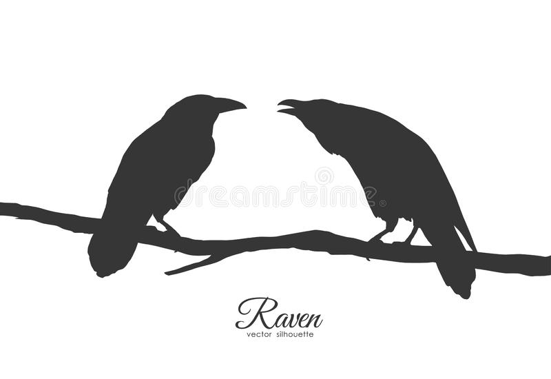Two Ravens sitting on branch on white background. Silhouette of birds royalty free illustration
