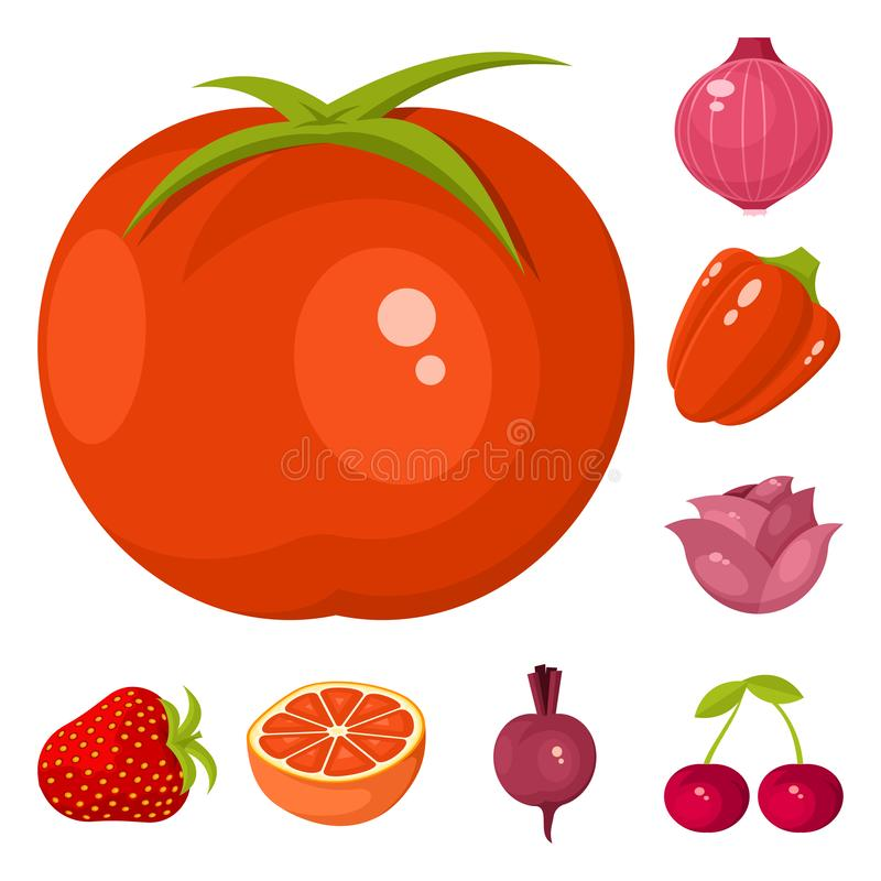 Vector design of vegetable and food icon. Collection of vegetable and ripe stock vector illustration. Vector illustration of vegetable and food symbol. Set of stock illustration