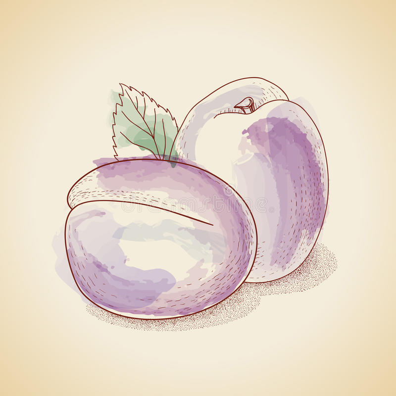 Vector illustration of vintage plum royalty free illustration