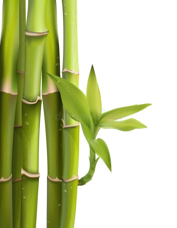Vector Illustration von grünen Bambusbäumen innerhalb des Waldes lizenzfreie abbildung