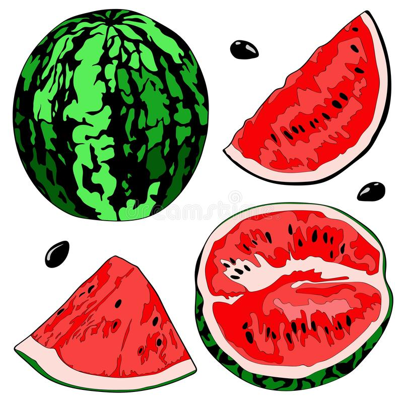 Vector illustration of a watermelon, half watermelon, a slice of watermelon. Color image. vector illustration