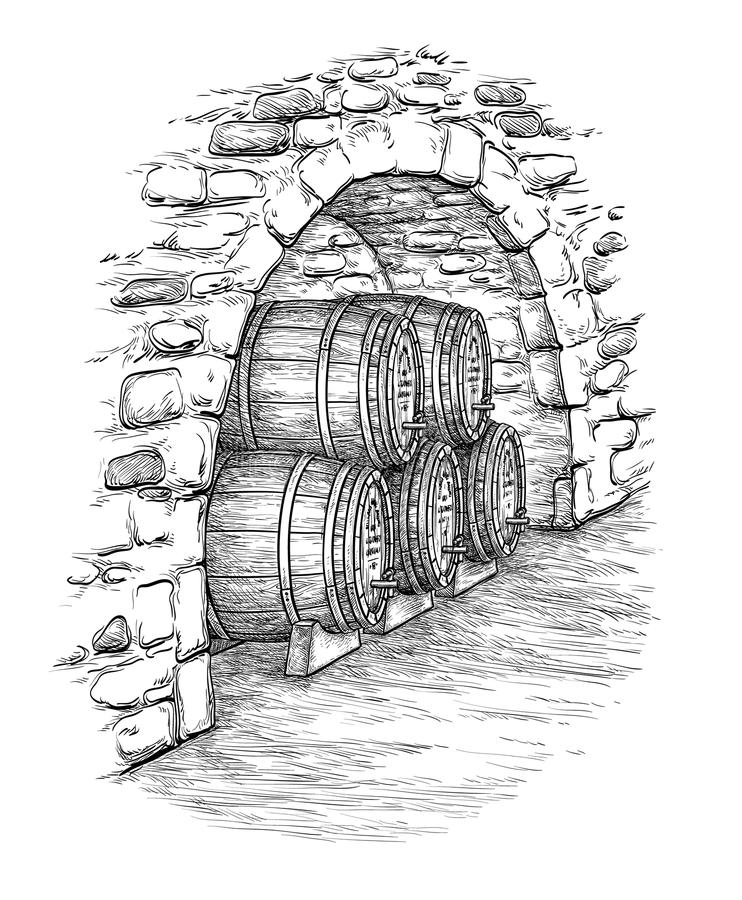 Vector illustration of wine cellar. Ancient cellar with wine wooden barrels. Isolated on white background. Hand drawn vector illustration stock illustration