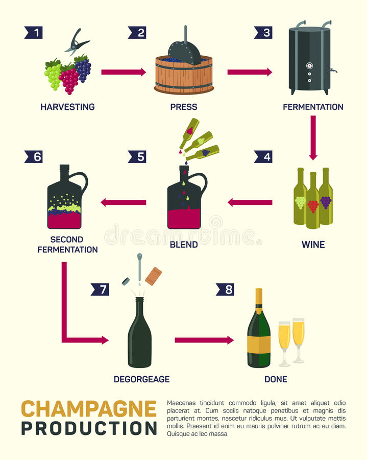 Vector illustration of wine making. How is made, infographic elements vector illustration