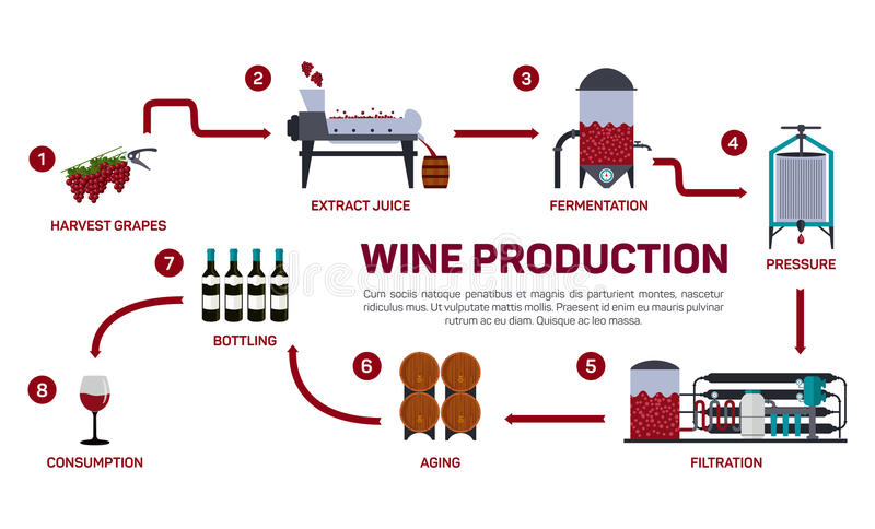 Vector illustration of wine making. How wine is made, wine elements, creating a wine, winemaker tool set and vineyard. Flat infographic. Production of vector illustration
