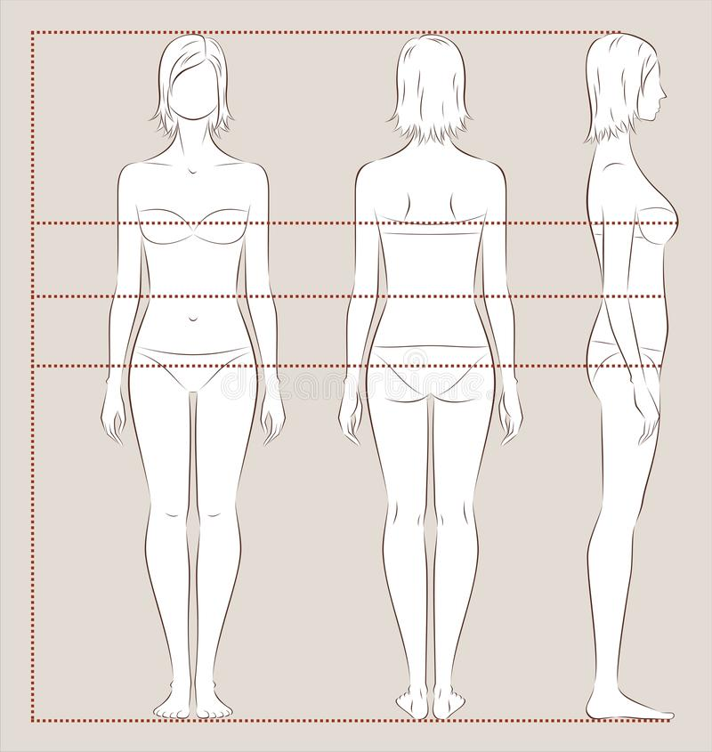 Women body measurements royalty free illustration