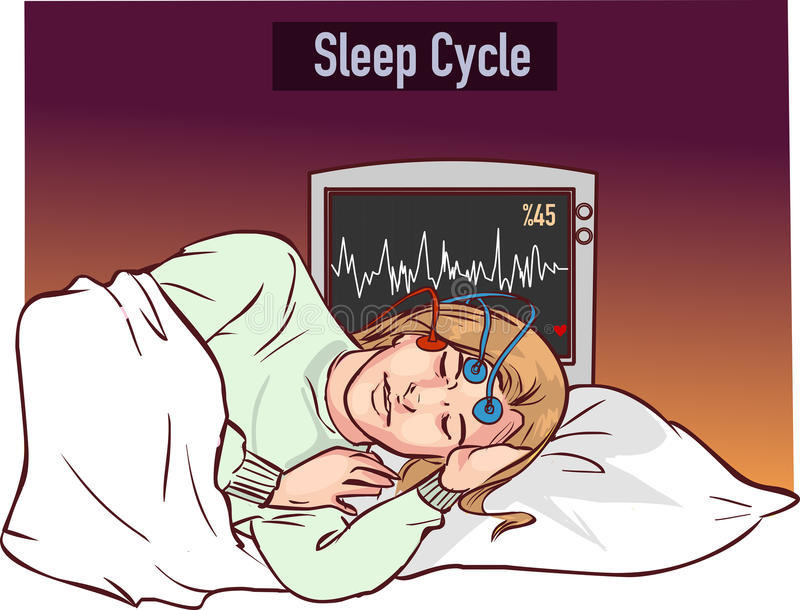 Vector illustration of a young girl sleeping and Sleep cycle gr vector illustration